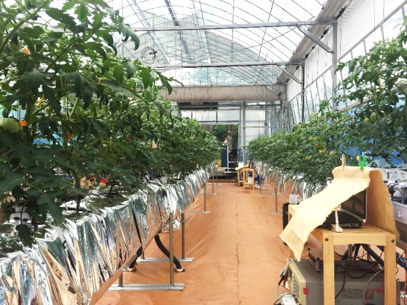 관악구 도시농업연구소의 작물재배