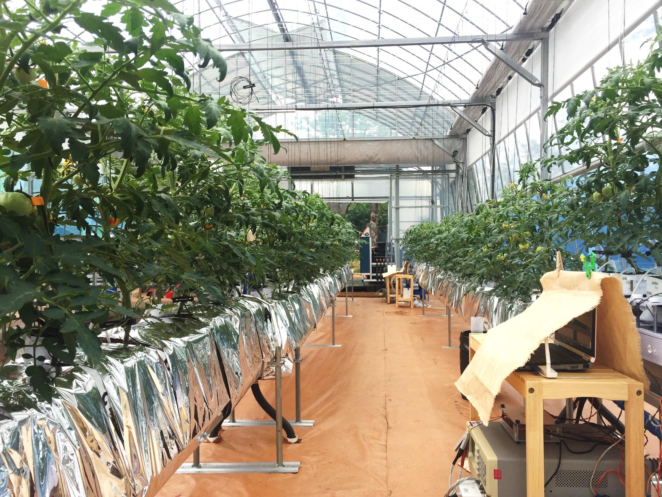 센서로 식물의 상태를 확인하는 스마트팜 온실의 내부