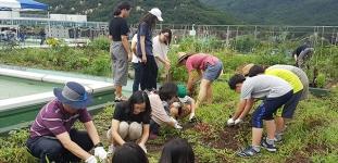 서울대 공대-관악도시농업네트워크, 서울대 옥상 빗물 텃밭에서 키운 감자 150kg 수확