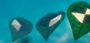 물속을 '나는 양탄자'? 서울대 조규진 교수팀, 나뭇잎 움직임 모사한  수중 소프트 로봇 개발